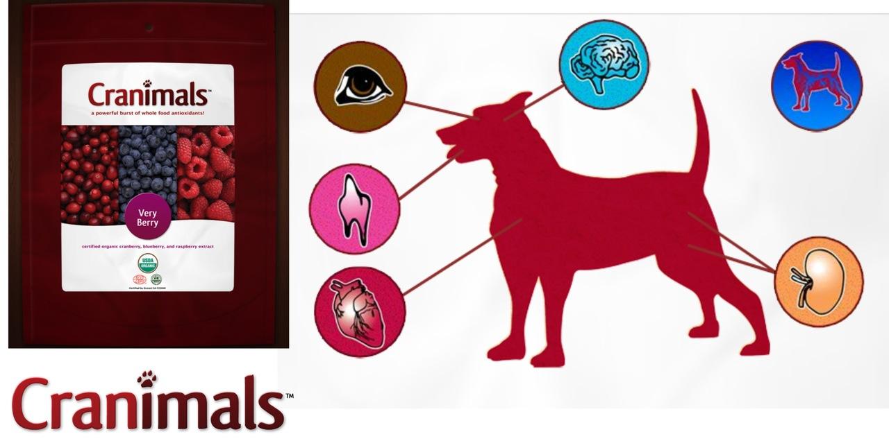 ...органов (см. схему выше), для профилактики - здоровым животным, а также собакам, подверженным нарушениям иммунной...